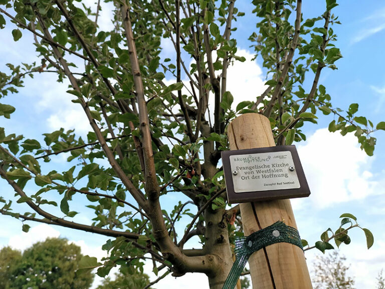 """Baum mit Plakette, Beschriftung """"Bäume der Hoffnung: Evangelische Kirche von Westfalen, Ort der Hoffnung."""""""
